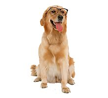 Dog with glasses Photographic Print