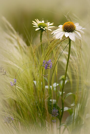 Summer softness by Jacky Parker