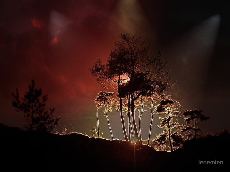 Almost Night Trees by ienemien