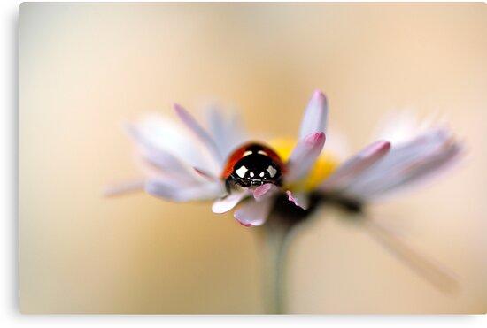 Daisy bug by Jacky Parker