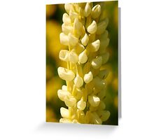 Yellow Lupin Greeting Card
