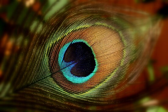 Peacock feather by i l d i    l a z a r