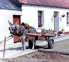 The Last Wurkin' Donkey In Ireland... by oulgundog
