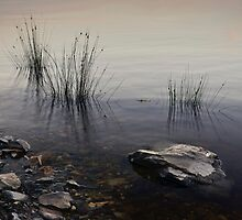 Reeds and rocks by Karine Radcliffe