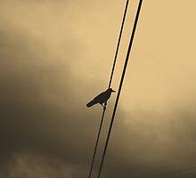 Wire by manahmanah