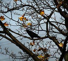 Autumn by manahmanah