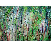 Eucalyptus Dreaming I Photographic Print