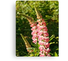 Pink Lupin Spike Canvas Print