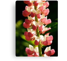 Pink Lupin Detail Canvas Print