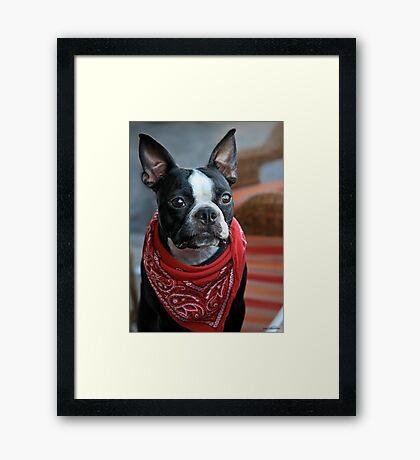 Perro Bandito Framed Print