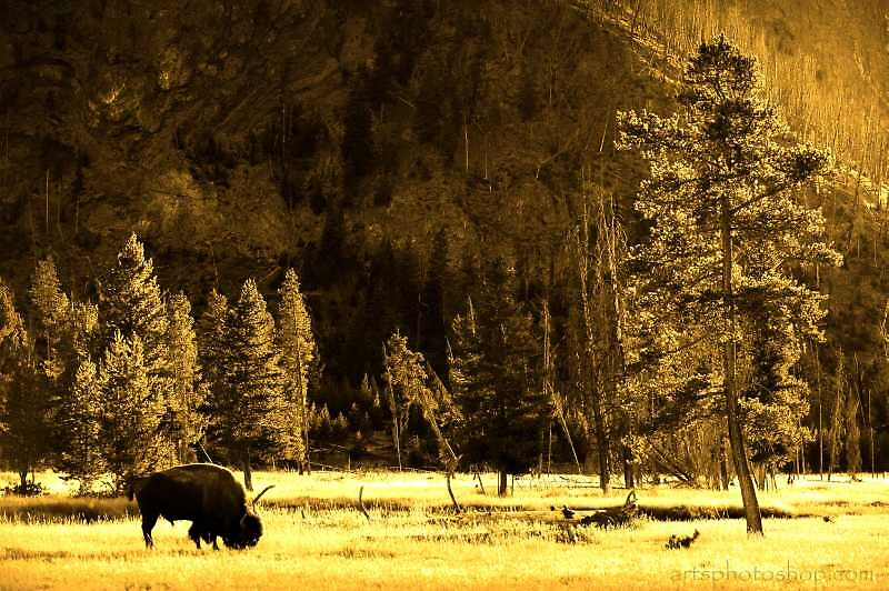 Yellowstone by artsphotoshop