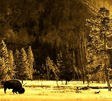Yellowstone by artsphotoshop