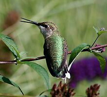 Singing Hummingbird by patti4glory