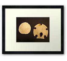 Male & Female Shells Framed Print