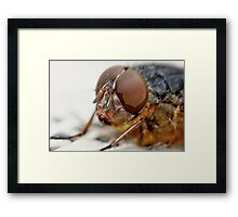 Fly Eye Framed Print