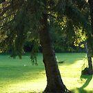 A Sunny Yard by Diane Petker