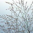 Grasses in the Sky by Len Bomba