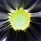 An Innner Glow by Terri~Lynn Bealle