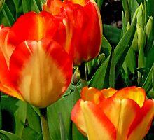 Lovely Tulips by satwant