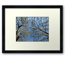 Lungs of the Eatth Framed Print