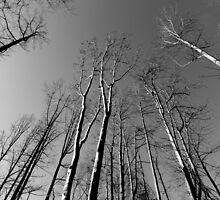 Looking UP - B&W    ^ by ctheworld