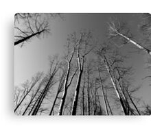 Looking UP - B&W    ^ Canvas Print