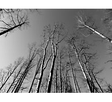 Looking UP - B&W    ^ Photographic Print