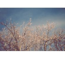 Cold February Mornings Photographic Print