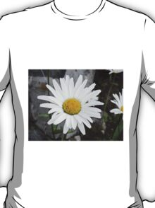 Chamomiles in the garden 4 T-Shirt