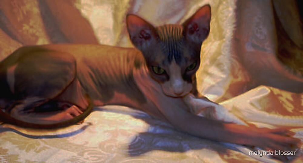 hairless--Sphynx by melynda blosser