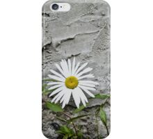 Chamomiles in the garden 7 iPhone Case/Skin