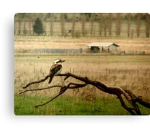 King of the Bush Canvas Print