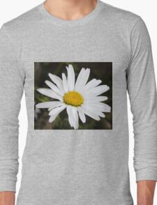 Chamomiles in the garden 12 Long Sleeve T-Shirt