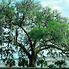 Harbor Trees by Mary Campbell
