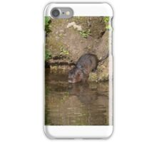 Water vole taking to the water iPhone Case/Skin