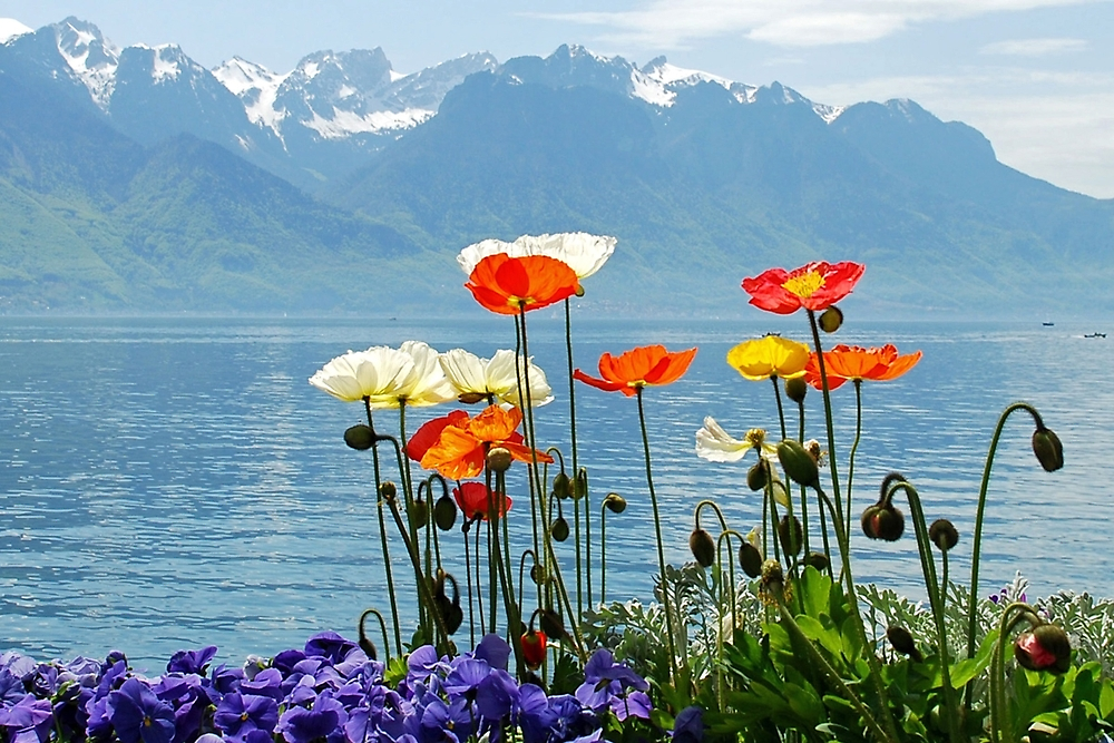 Poppies at the lake by Arie Koene