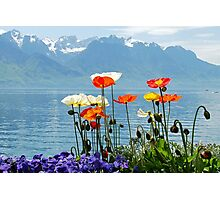 Poppies at the lake Photographic Print