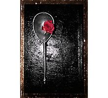 Medicinal Rose Photographic Print