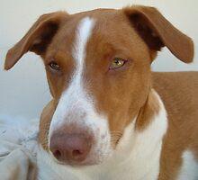 Mongrel dog by atkinnt