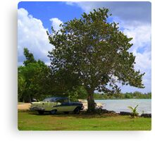 Cool under the Shade of a Tree :) Canvas Print