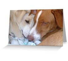Mongrel Dogs Greeting Card