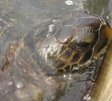 Sea Turtle by Laurie Puglia