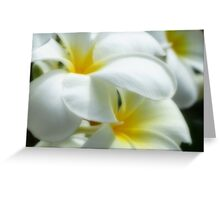 Soft and White Greeting Card