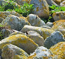 Jenny Wren On The Seashore by Malcolm Snook