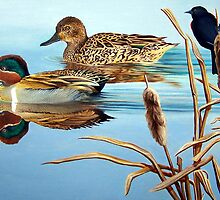 Green-winged Teals by John Houle