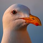 Sunset Gull by KarDanCreations