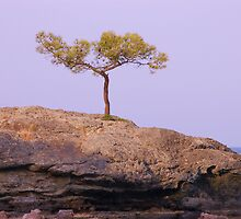 Where is this tree growing on rocks? by loiteke