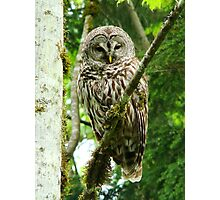 OWLETTE SAYING HELLO TO YOU Photographic Print