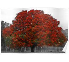 Chestnut Tree II Poster