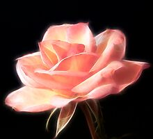 Mystic Rose by Sheryl Kasper